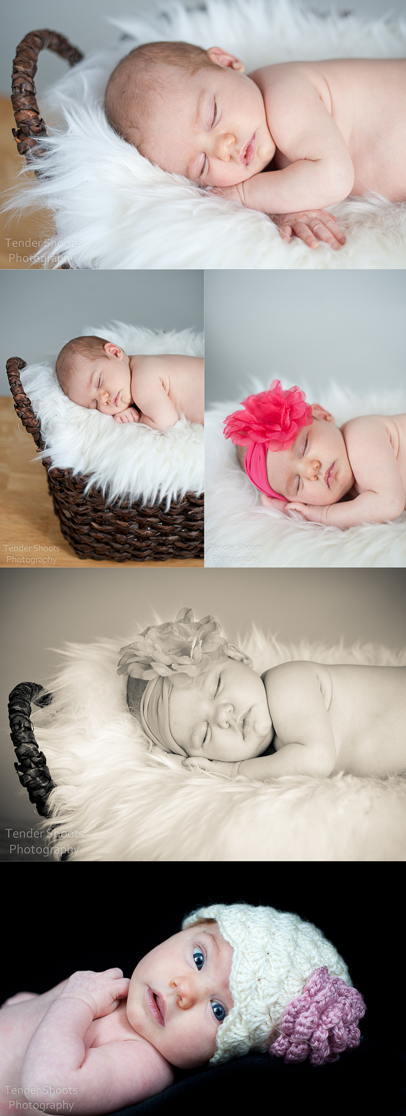 Tender Shoots photography newborn shoot