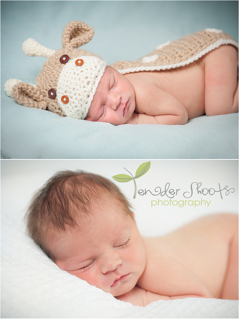 Tender Shoots newborn photography
